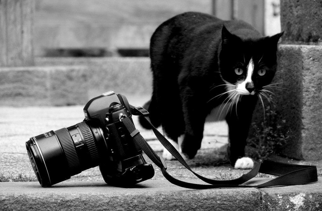 Các tác phẩm nhiếp ảnh đen trắng tuyệt đẹp. - POLYART ...